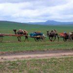 Mongolsko – Tajgou